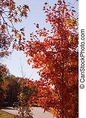 à côté de, route, automne