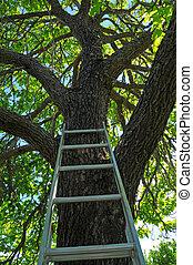 échelle, aller, arbre, haut