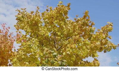 éclat, paysage., rayons, naturel, arbres, forêt automne, par, sun's