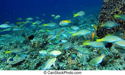 école, parrotfish, fish