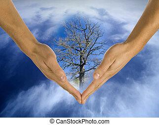 écologie, mains, responsabilité, business
