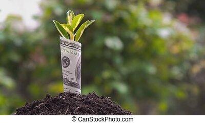 économique, symbole, croissance