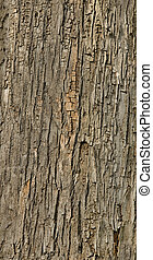 écorce, arbre, carrelé, texture