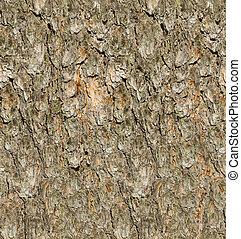 écorce, arbre, seamless, pin, texture.