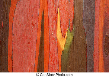 écorce, eucalyptus
