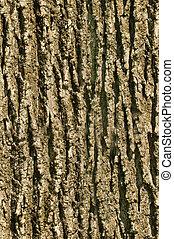 écorce, texture, arbre, seamless, fond