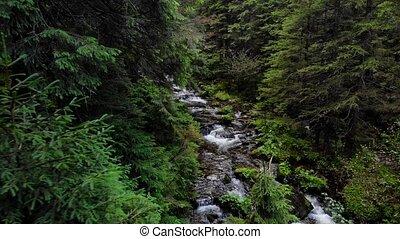 écoulement, rivière, pierres, forest., montagne