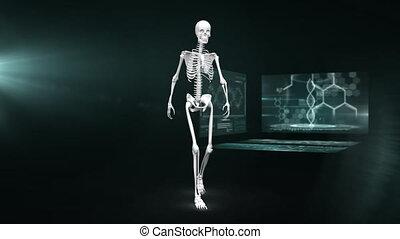 écran, animation, marche, squelette, humain, scientifique