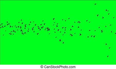 écran, vert, troupeau, oiseaux