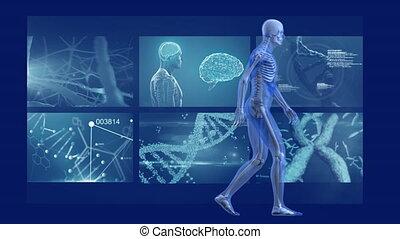 écrans, animation, modèle, marche, homme, balayage, humain, mri