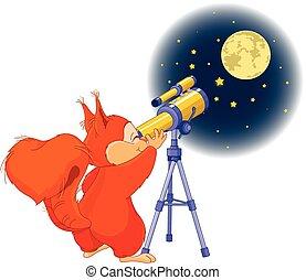 écureuil, astronome