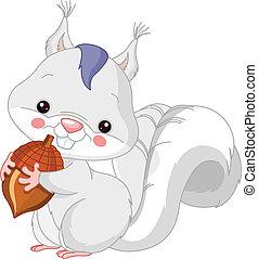 écureuil, zoo., amusement, blanc
