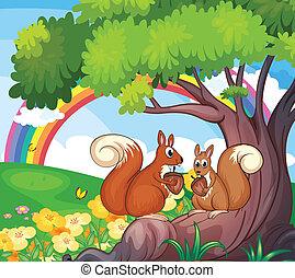 écureuils arbre