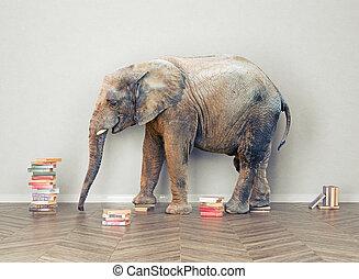 éléphant, salle