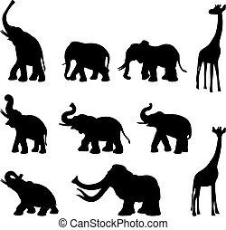 éléphants, girafe, mommoth