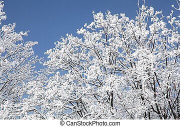 élevé, tatras, slovaquie, arbres, neigeux