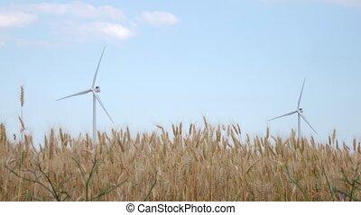 éoliennes, blé, spikelets, deux, tourner, champ, mûrir