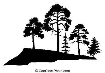 épais, feuilles, isilated, arbre, arbres, blanc, coffre, mountaine, silhouette, arrière-plan., grand