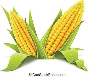 épi maïs, couple
