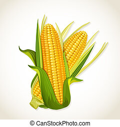 épi maïs, mûre