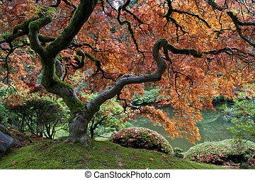 érable, japonaise, rouges, jardin