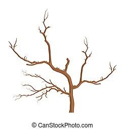 été, arbre diverge