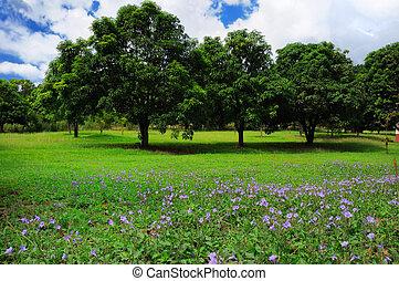 été, arbres, paysage