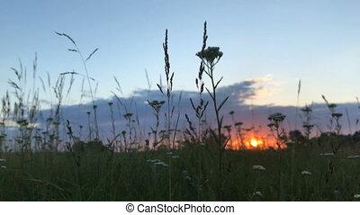 été, champ coucher soleil
