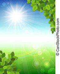 été, feuilles, arrière-plan vert