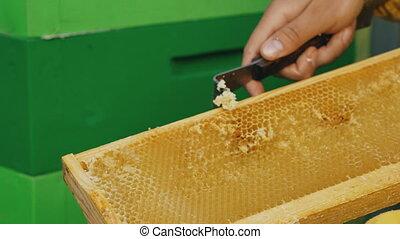 été, fonctionnement, armature bois, apiculteur, miel, closeup, propre, rucher, jour, homme