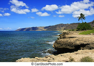 été, hawaien, côte