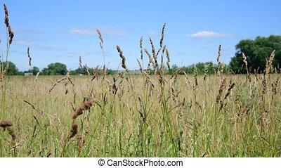été, herbe, ensoleillé, pré, jour