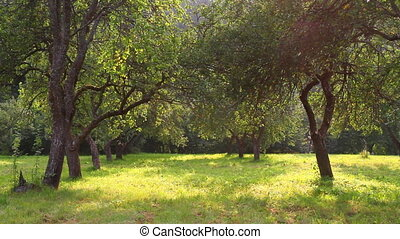 été, jardin, pomme