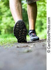 été, marche, traîner courir, forêt, ou