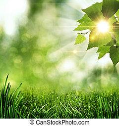 été, naturel, résumé, arrière-plans, matin, tôt, forêt