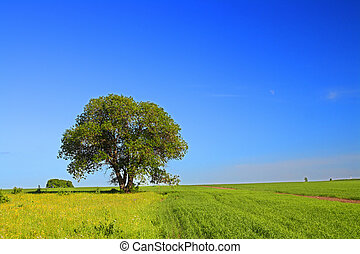 été, paysage arbre