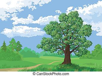 été, paysage, forêt arbre, chêne