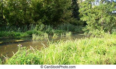été, peu profond, ensoleillé, rivière, jour