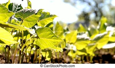 été, plant, ensoleillé, develops, vert, jour, vent