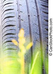 été, pneu, voiture, vert, fin, herbe