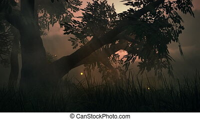 été, pré, fantasme, magique, (1145), lumières, bois, fée, fireflies, boucle