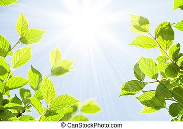 été, résumé, ensoleillé, bokeh, arrière-plan vert, feuilles