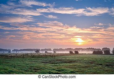 été, sur, pastoral, levers de soleil