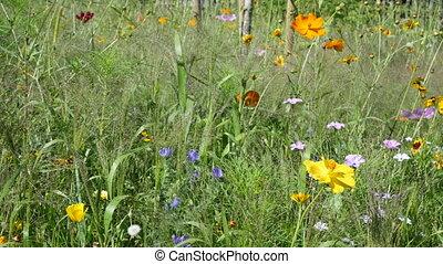 été, wildflowers