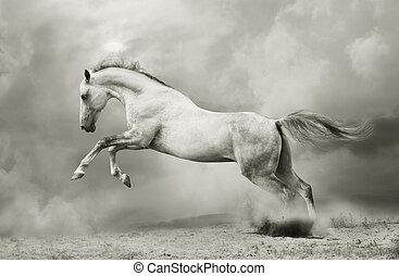 étalon, noir, silver-white