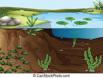 étang, écosystème