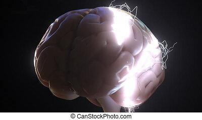 étincelles, sur, idées, apparenté, ou, animation, brain., humain, conceptuel, idée génie