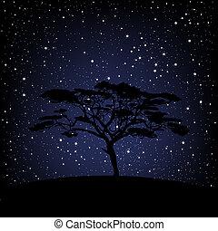 étoilé, sur, arbre, nuit