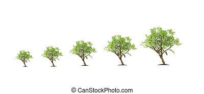 évolution, arbre