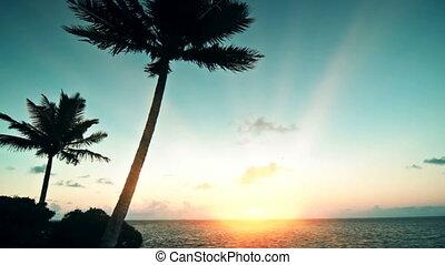 île, aube, exotique
